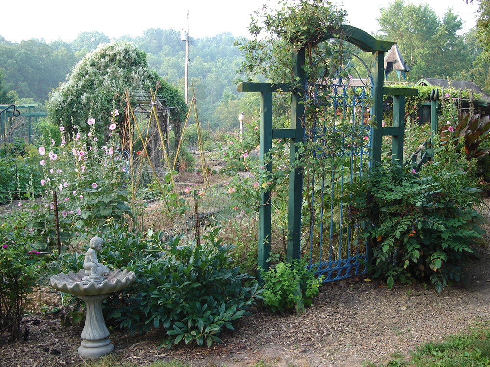 Garden__foggy_morning
